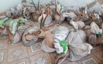 police foil bid to smuggle 18 deer in sindh
