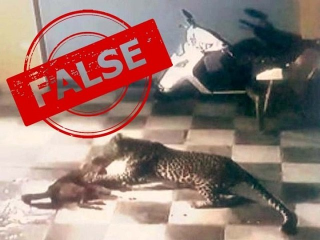 tribune fact check leopard jumps into islamabad house attacks pet dog