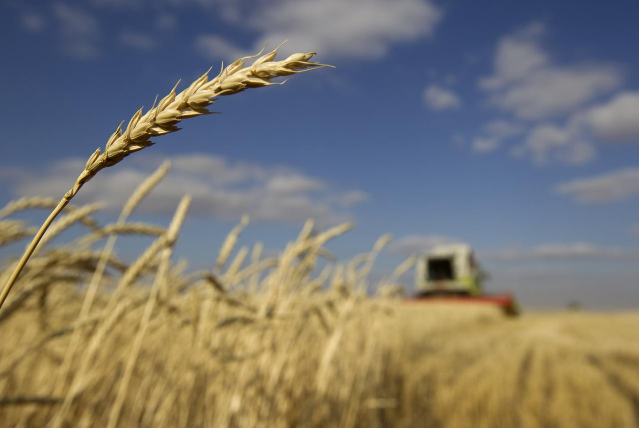 centre deaf to punjab s wheat difficulties