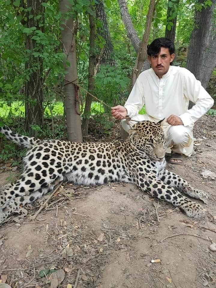 six men arrested for killing leopard