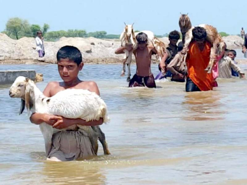 dearth of data delays sindh s social protection programme