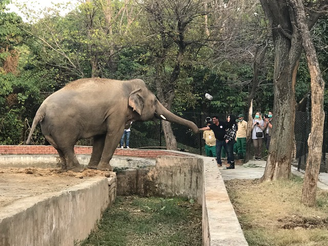 Cher singing to Kaavan the day before his departure to Cambodia.