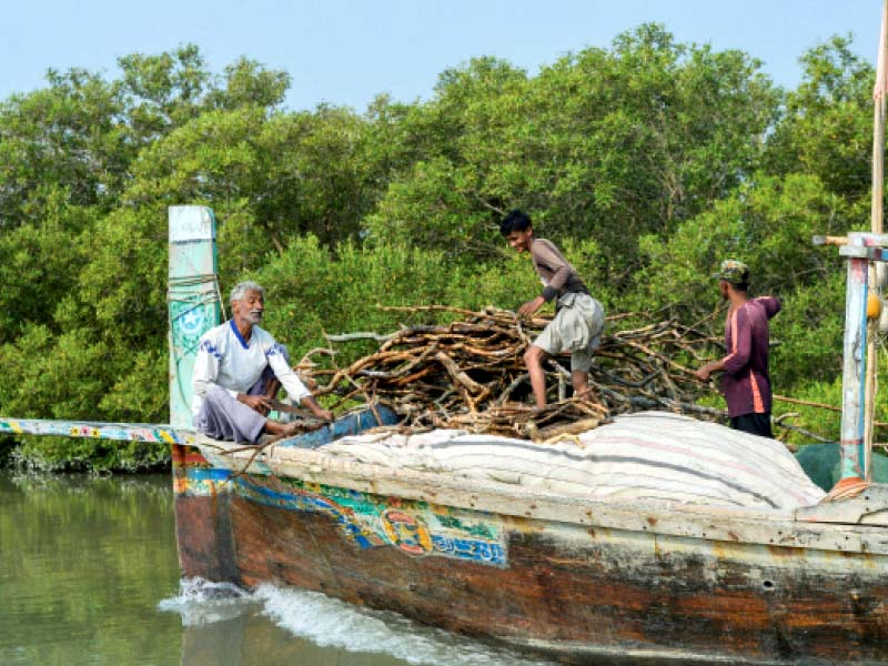 study finds tremendous growth in mangroves
