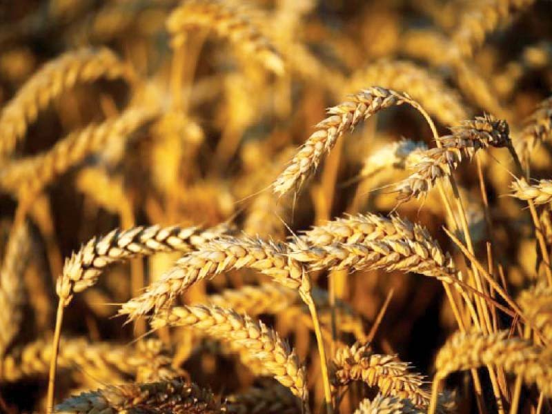 ministry of commerce told the committee that tcp had imported 100 000 tons of wheat while passco imported 460 000 tons photo file