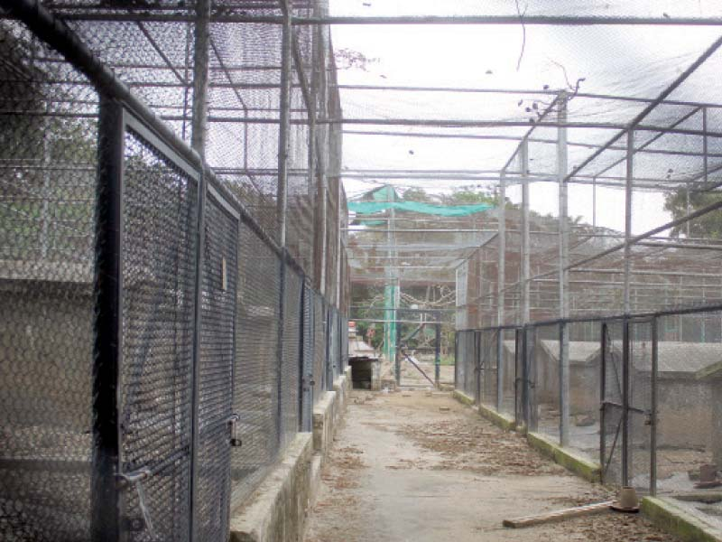 cages lie empty at islamabad zoo after more than 400 animals were shifted to ayub national park in rawalpindi photo online