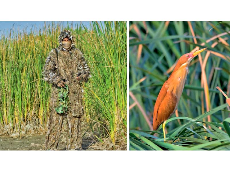 Photographer Yasir Pechuho often makes use of camouflage as he attempts to capture pictures of all the 329 bird species found in Sindh. PHOTOS: COURTESY YASIR PECHUHO