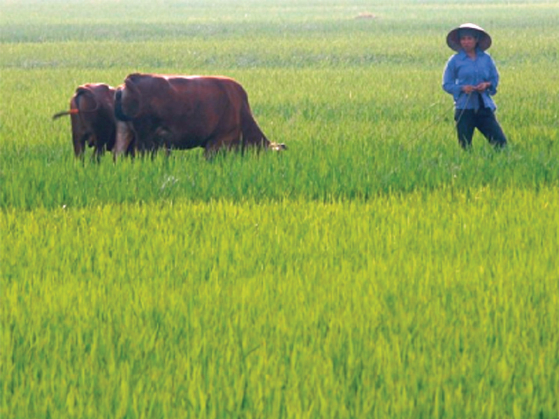 scarred by war and stifled by communism the vietnamese are now looking to the future