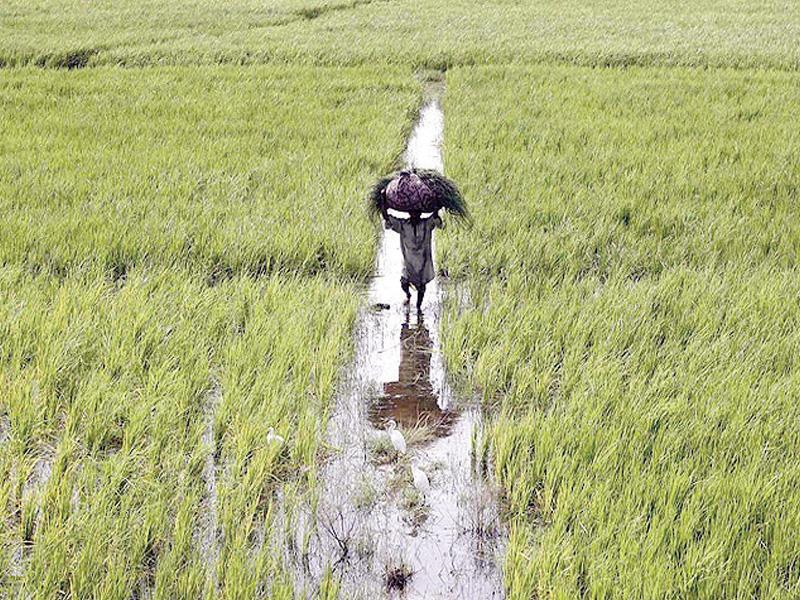 let consumers farmers decide