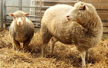 this file photo shows dolly the cloned sheep photo reuters file