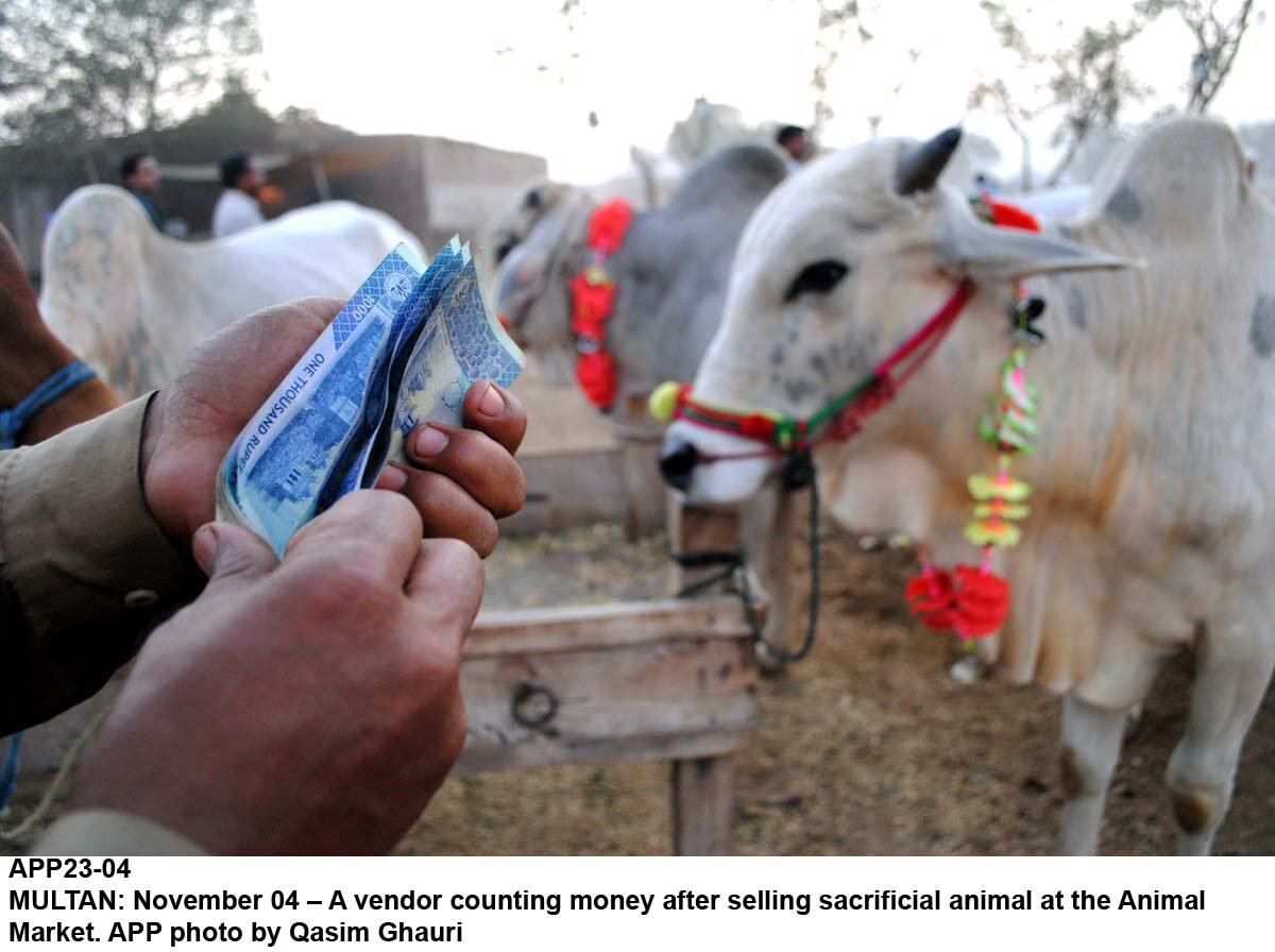 the market would allow small cattle producers and buyers a chance to avoid contractors and middlemen photo app
