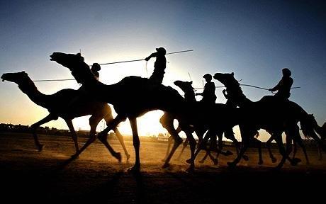 noorpur thal hosts annual camel market
