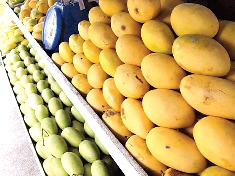 pakistan s mangoes can capture a large portion of the mauritius market in the next five years due to its unique variety of tastes and price competitiveness photo file
