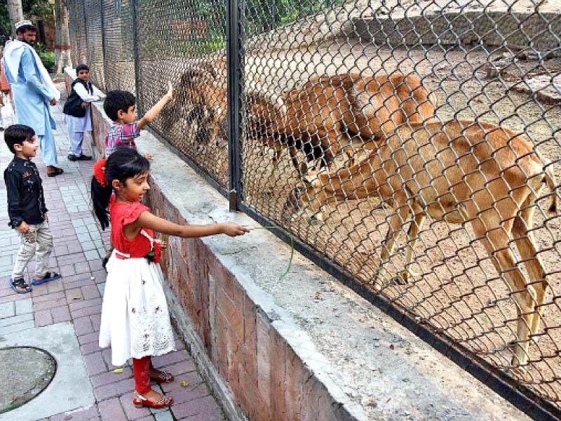 children offering grass to herbivores in lahore zoo government plans to micro chip all the animals in provincial zoos and wildlife parks for their real time monitoring photo app