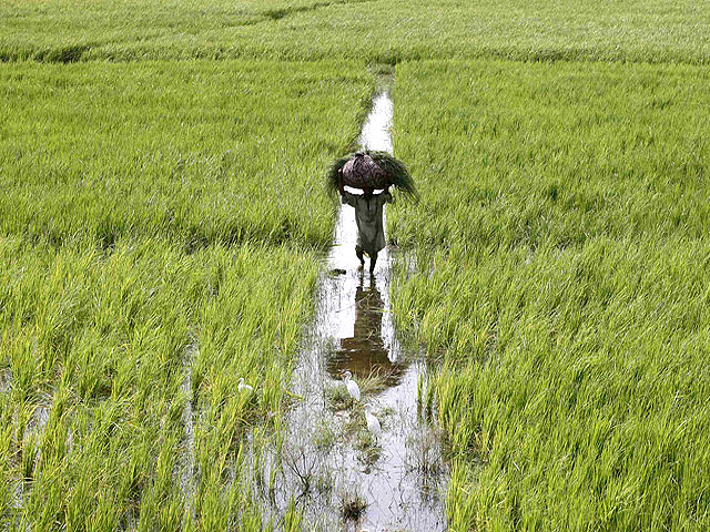 subsidy scheme launched for agriculture sector