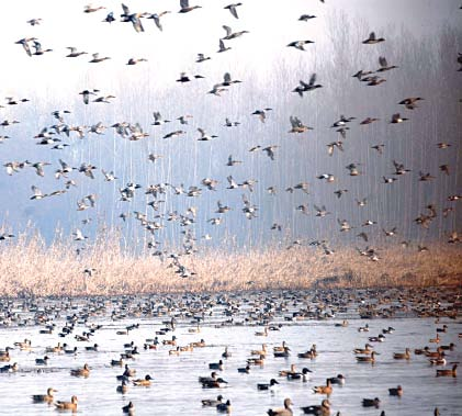over 7 000 birds set free