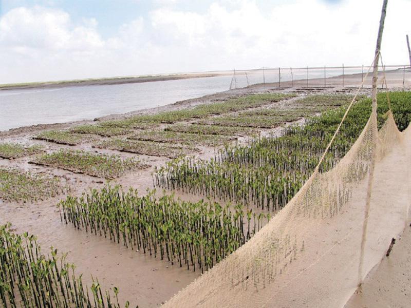 the mangroves were planned to be planted over 3 350 hectares of land on two sites in thatta district and one site in badin photo file