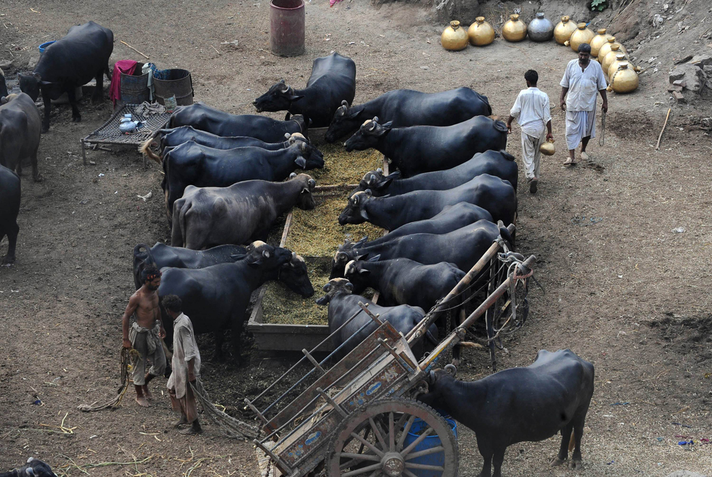 72m was the number of milkproducing animals in the country as per 2007 estimates photo afp file