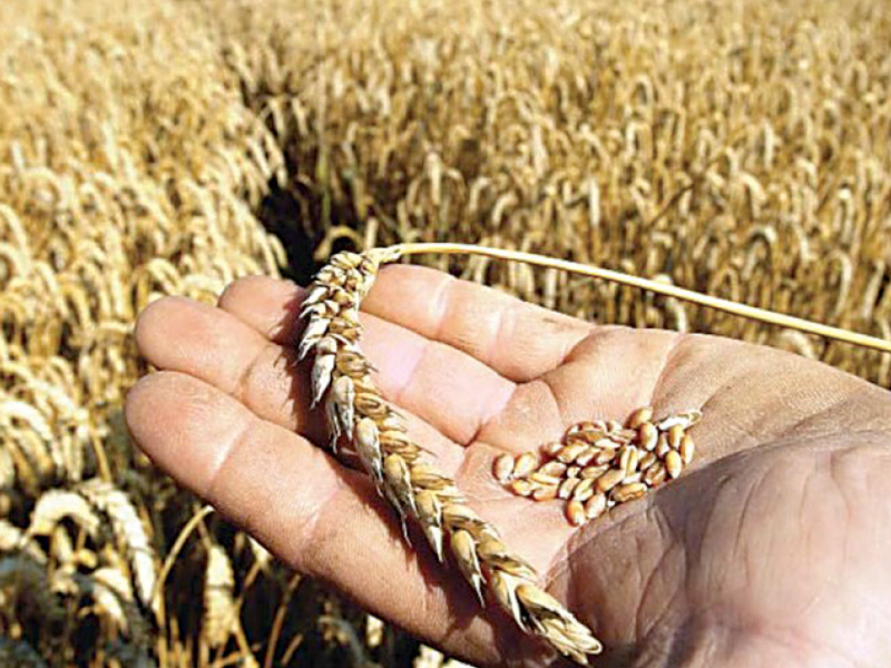food dept to provide wheat to small grinding units