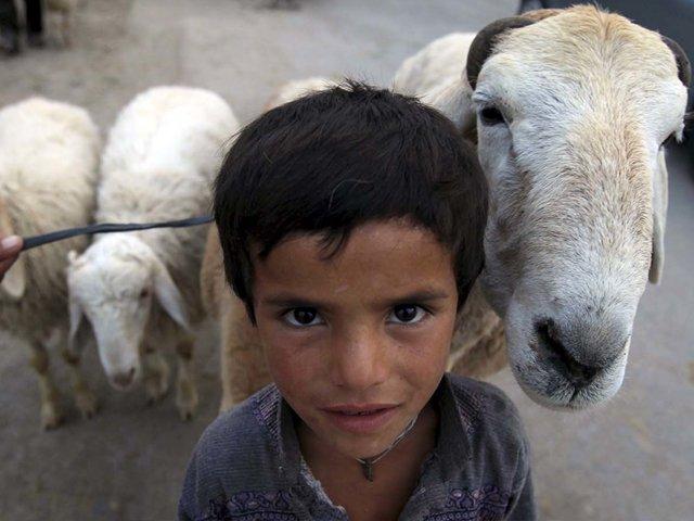 munir and ali needed a goat like raju