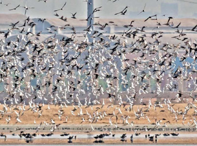year of boon for sindh s wildlife