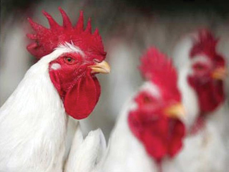 poultry prices double in two months