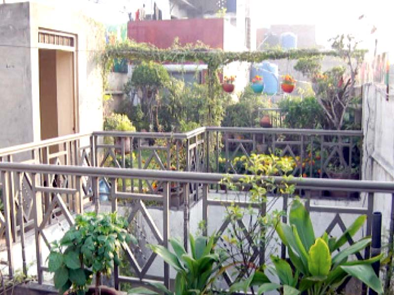 Citizen plants roof garden to beat inflation
