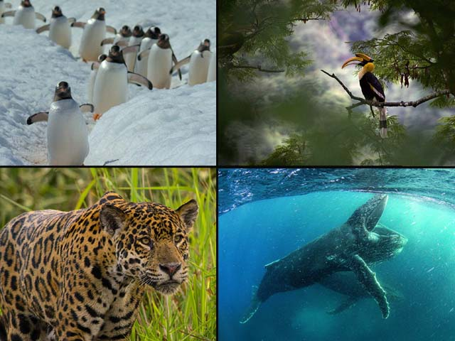 The Netflix documentary aims to take a look at the impact of climate change on the various life forms which populate the Earth.