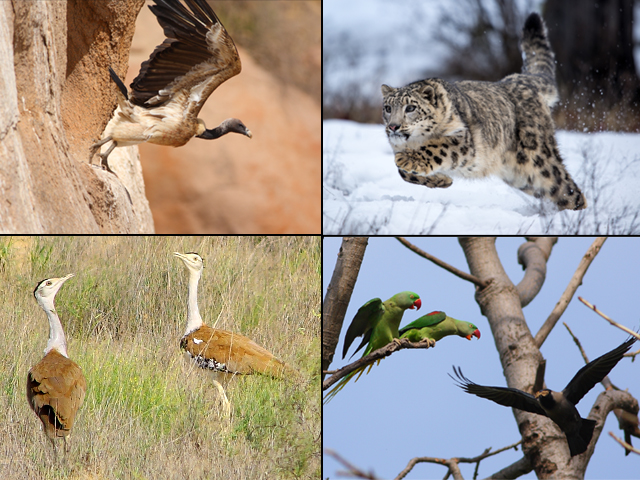 Land use changes have chased off many of these animals and birds as their habitats shrink. PHOTO: WORLD WILDLIFE FUND-PAKISTAN