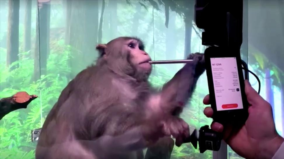 musk s neuralink shows monkey with brain chip playing videogame