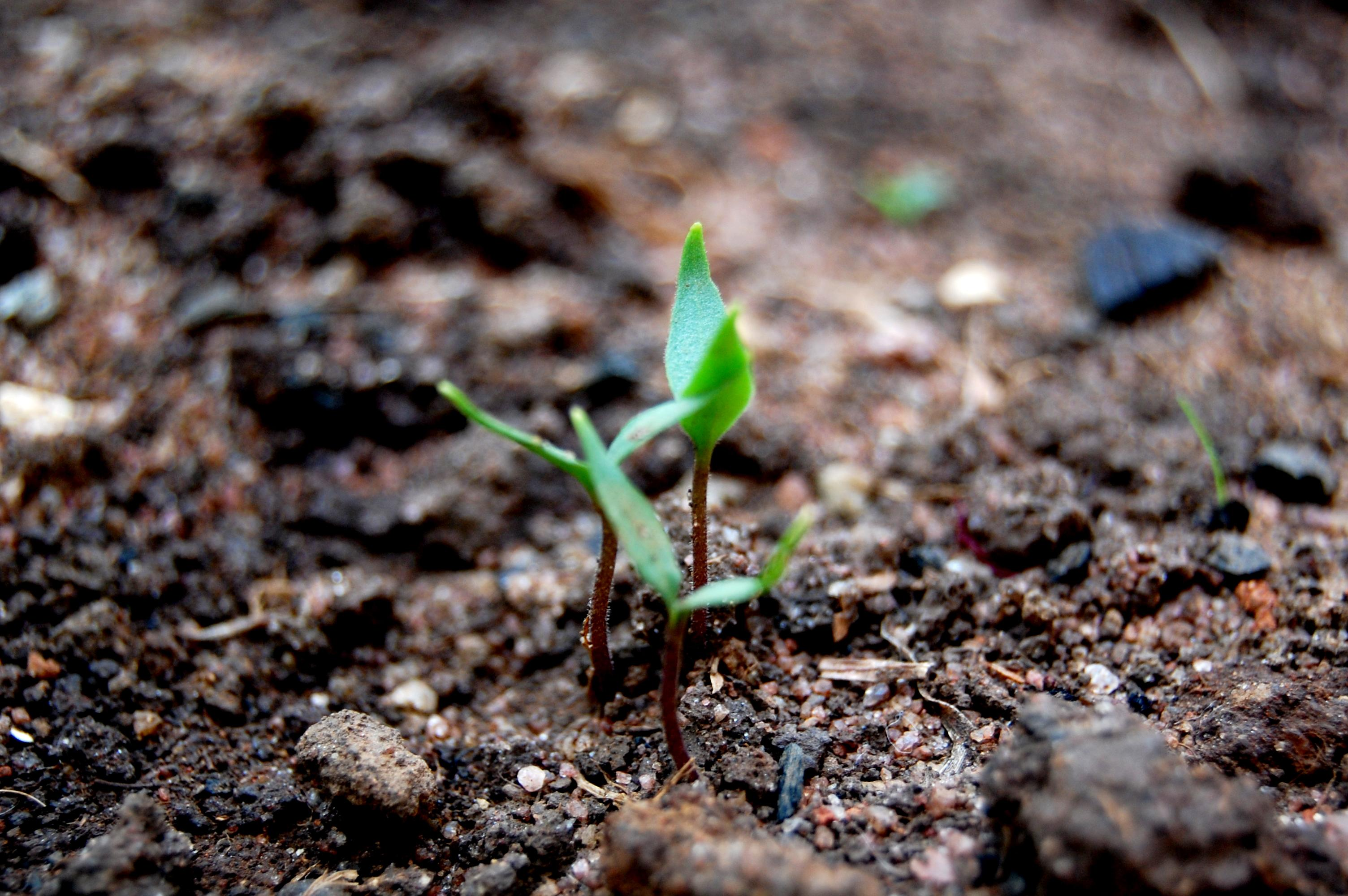 The forester said an estimated 17 million seedlings, produced by the department itself, will be ready for plantation by December 2015.  PHOTO: Stock Image