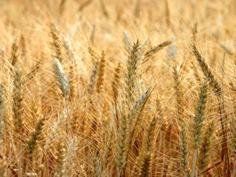 good crop no ban on inter provincial movement of wheat in 2015