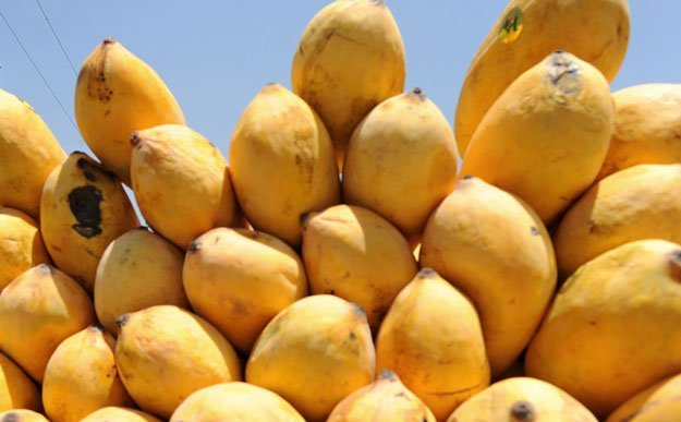 roundabout 3 5 per kg is the price of pakistani mangoes in different cities of the us photo afp