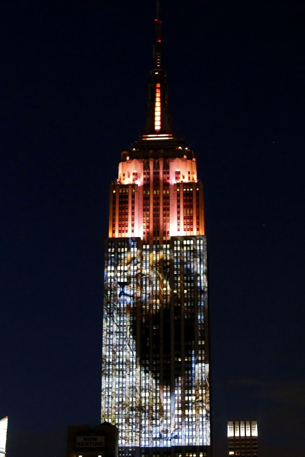cecil the lion from zimbabwe that was killed by an american dentist is projected on the empire state building in the 039 projecting change on the empire state building 039 project made by the oscar winning director and founder of oceanic preservation society louis psihoyos and producer fisher stevens in new york on august 1 2015 photo afp
