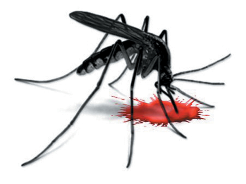 third suspected case of dengue reported at saidu hospital