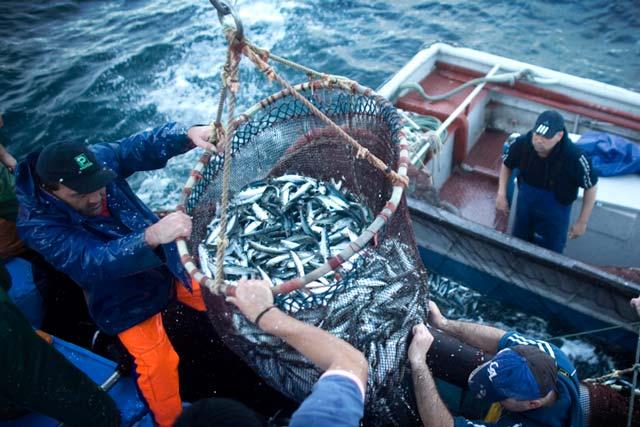 russian fishing trawler sinks in barents sea 17 feared dead