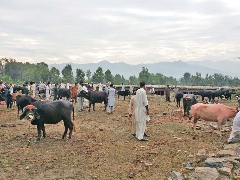 doing business locals prefer buying cattle in informal markets