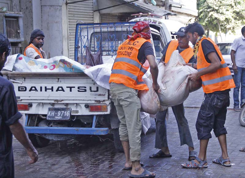 kmc workers lift the remains of a sacrificial animal in karachi citizens were left high and dry when city officials didn t promptly collect the animal remains on eid photo online