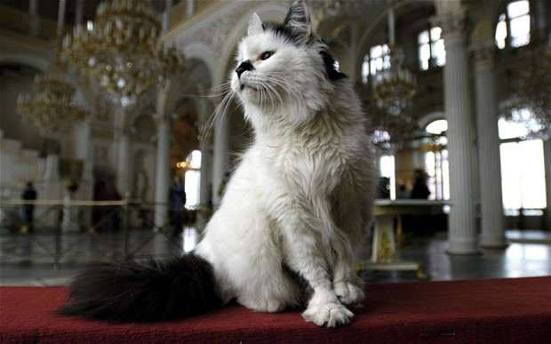 the nine lives of russia s hermitage cats