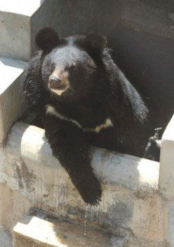 rescued bear becomes a beacon of hope