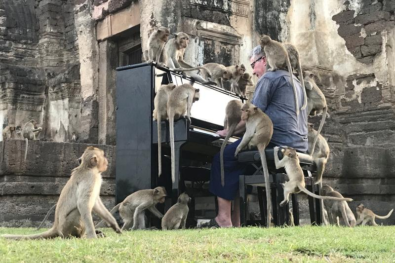 british pianist s velvety tones soothe thailand s hungry monkeys