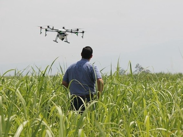 One T16 drone can spray insecticides over 10 hectares of farms every hour. PHOTO: APP/CGTN