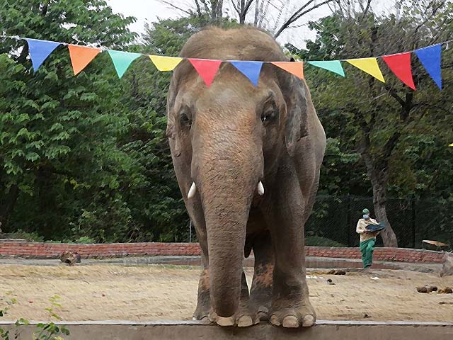 how kaavan attained freedom after 35 years