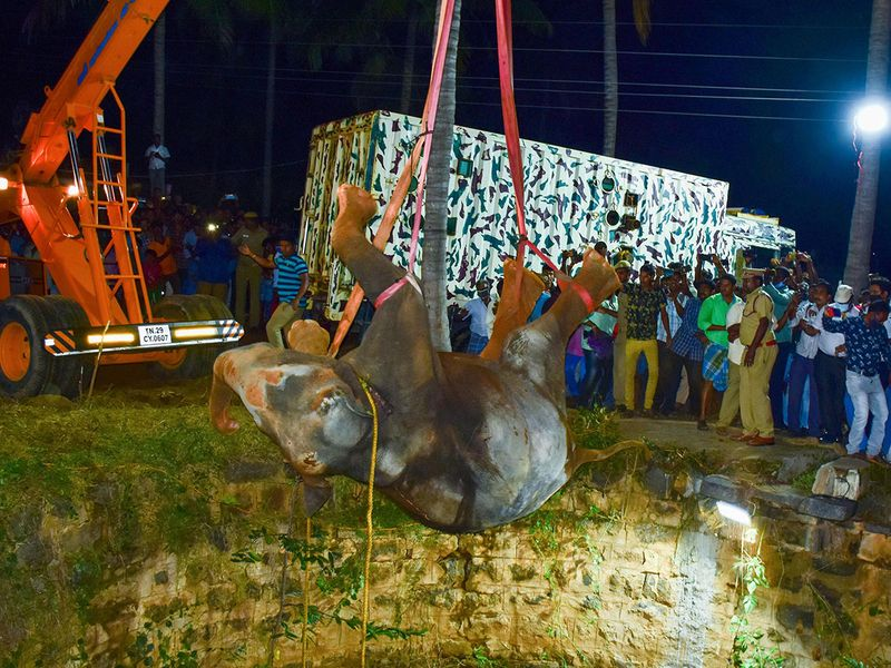 watch elephant hoisted from deep well in india