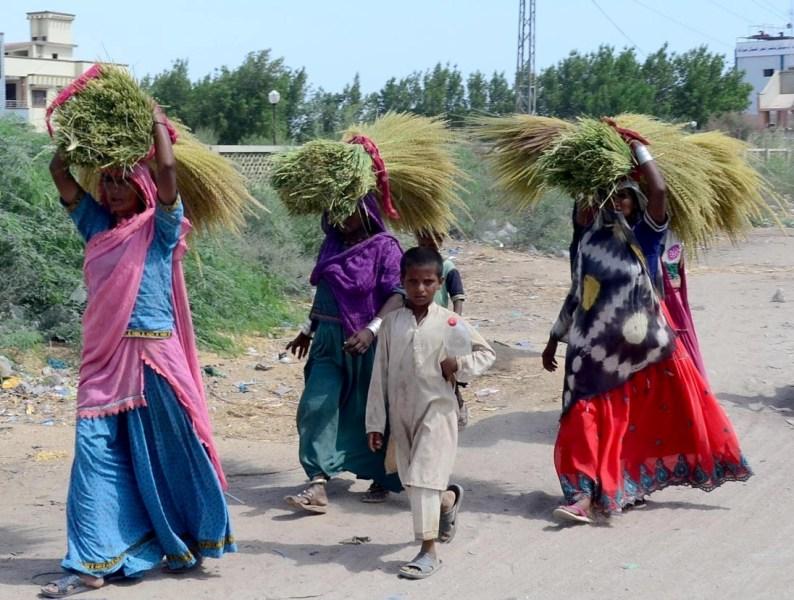 rural women on frontline of pandemic calamities