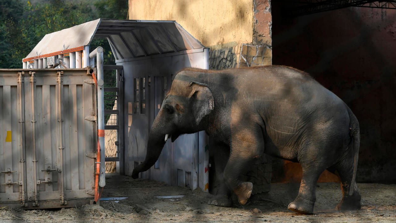 islamabad s only zoo shuts after last animals moved