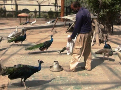 shc issues notices over zoo animals state