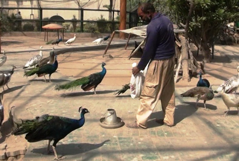 SHC issues notices over zoo animals' state