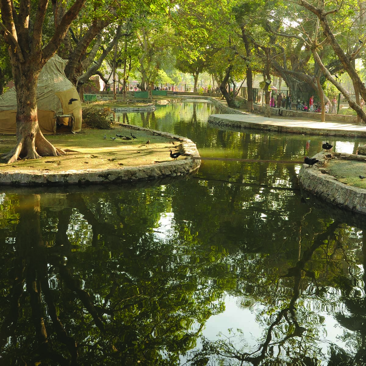 lahore zoo preserves remains of endangered species