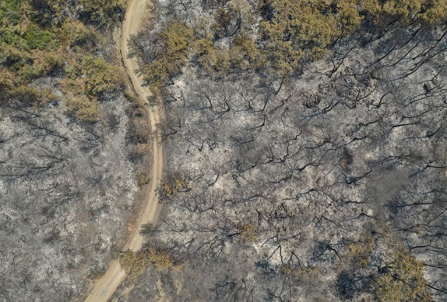 Drone footage reveals trees burnt by a wildfire near Marmaris, Turkey, August 1, 2021. PHOTO: REUTERS