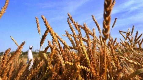 na panel concerned over wheat stock situation